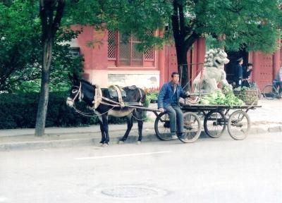 当時既に市中心部へ写真のようなロバや馬の引く車の侵入は禁止されていたけれど、比較的郊外に当たるこの界ワイには、まだこのような姿がみられた 1992 北京大学正門横にて