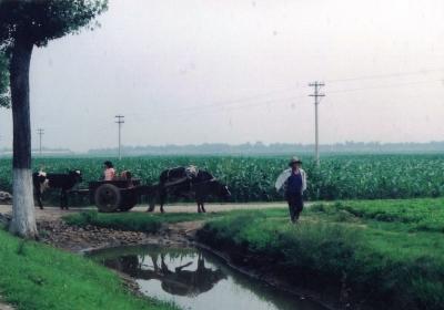 ノドカな農村風景 1993 北京郊外