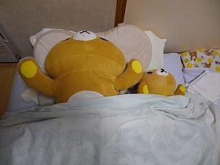 クマジ昼寝