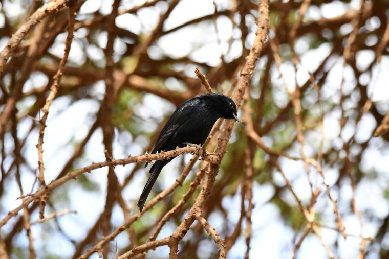 鳥15_1908033