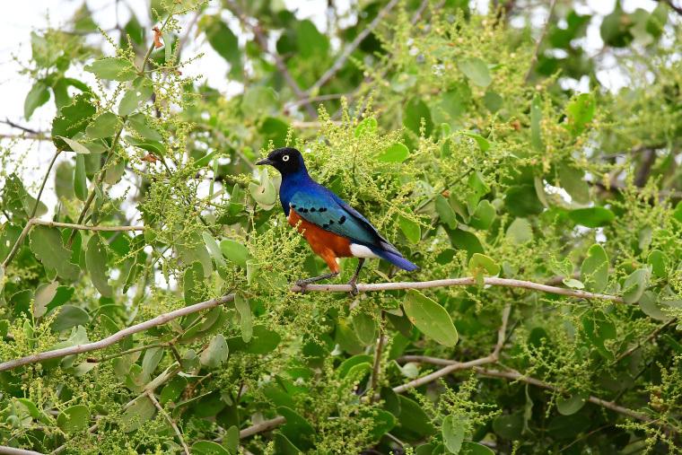 鳥16_1908033