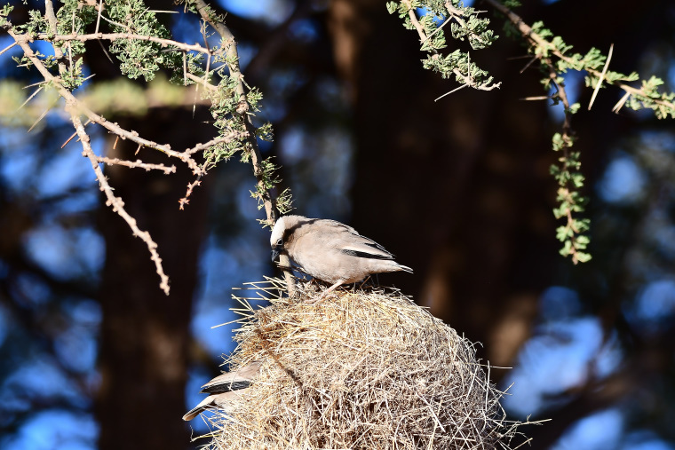 鳥8_1908033