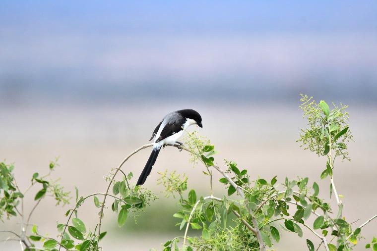 鳥9_1908033