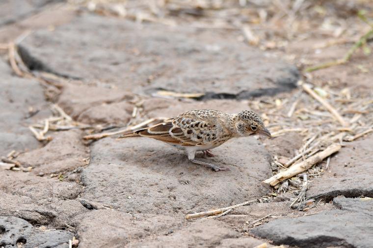鳥10_1908033