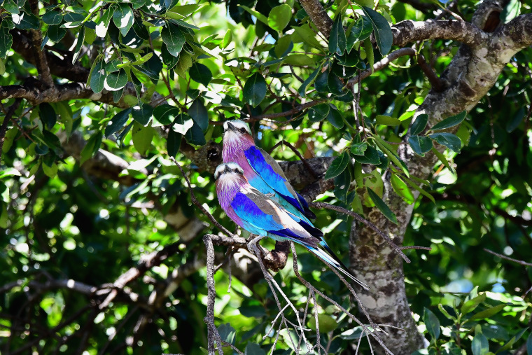 鳥2_1908033