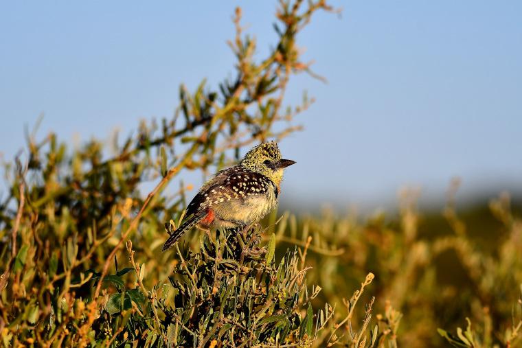 鳥5_1908033