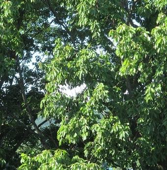 ハートの木漏れ日1