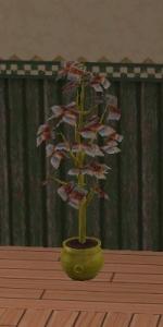 金のなる木1