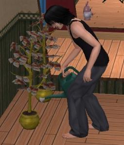金のなる木2