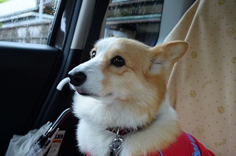 dog20180507_3.jpg