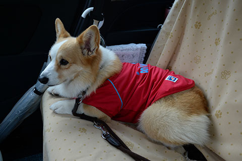 dog20180507_4.jpg