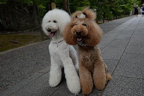 dog20180526_1.jpg