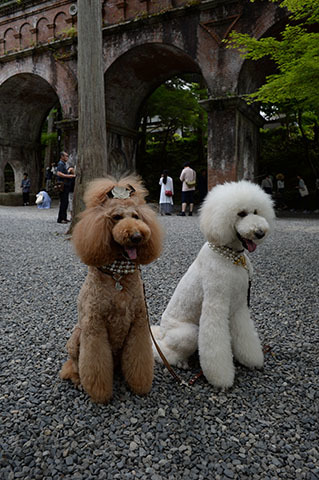dog20180526_3.jpg