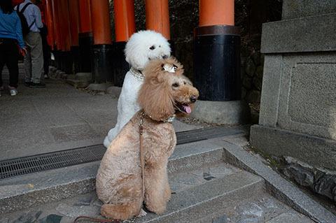 dog20180526_4.jpg