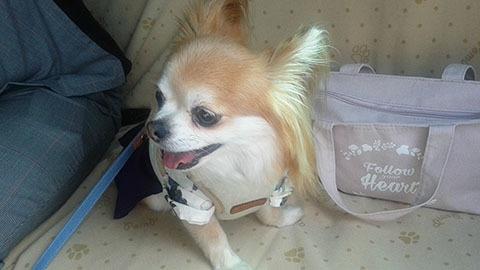 dog20181009_3.jpg