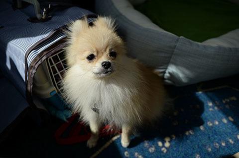 dog20181012_4.jpg