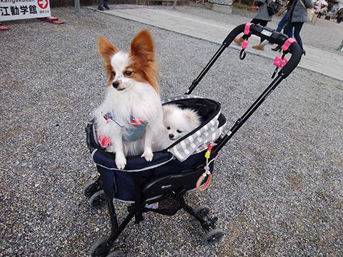 dog20190105_3.jpg