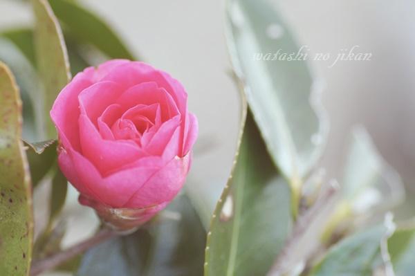 flower190128.jpg