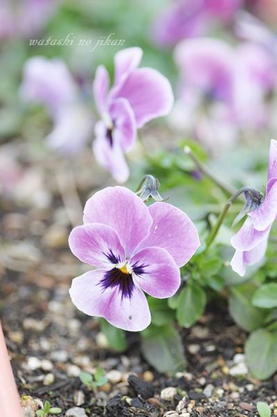 flower190209.jpg