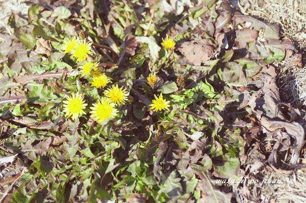 flower190210.jpg