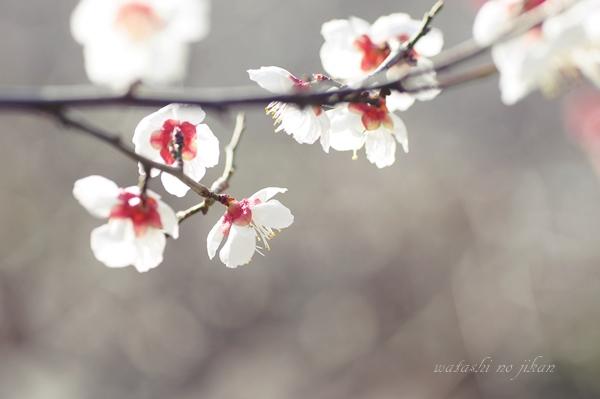 flower190219.jpg