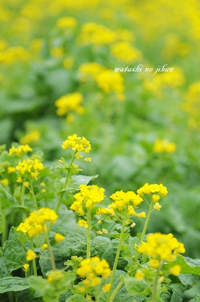 flower190226.jpg