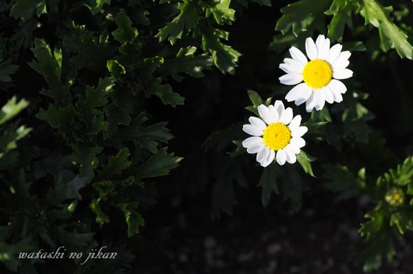 flower190301.jpg