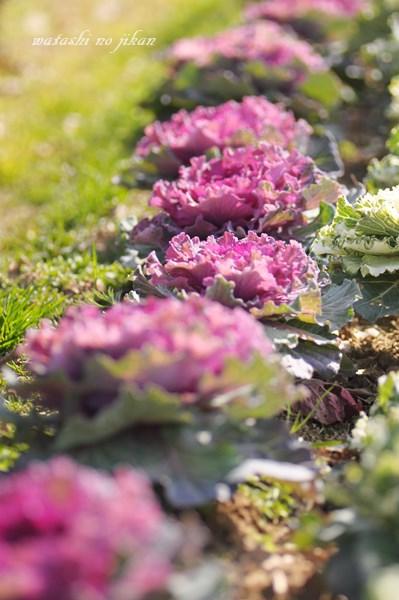 flower190305.jpg