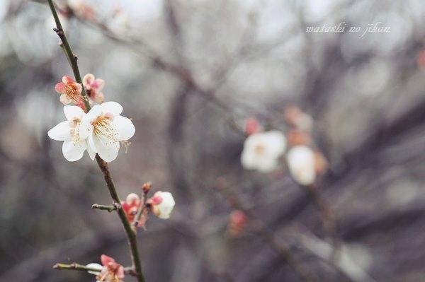 flower190310.jpg