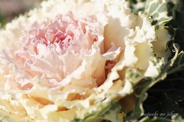 flower190311.jpg