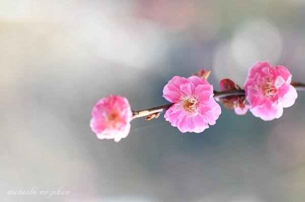 flower190312.jpg