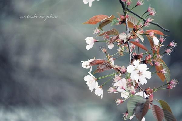 flower190315.jpg