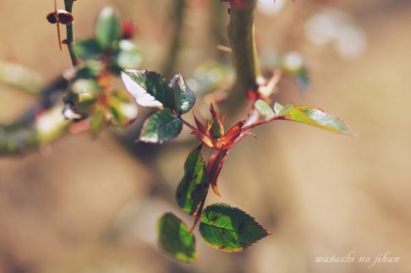flower190316.jpg