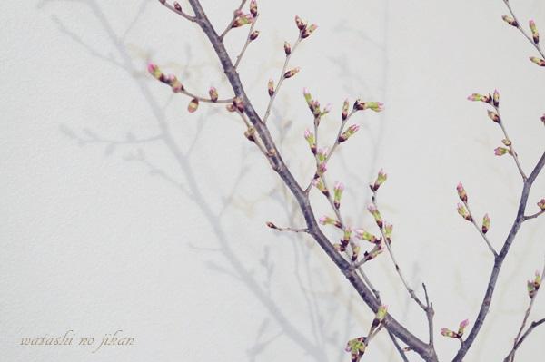 flower190319.jpg