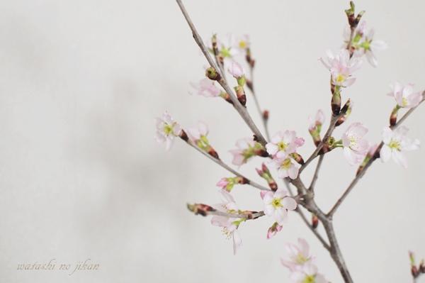 flower190320.jpg