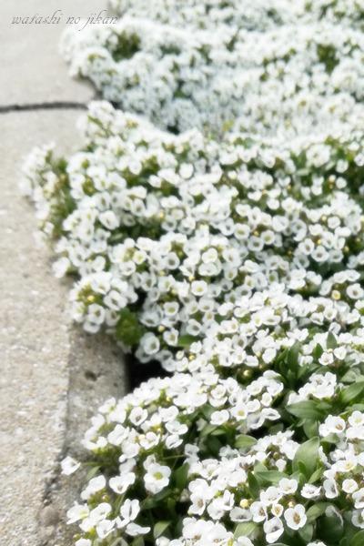 flower190321.jpg