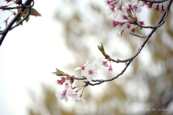 flower190324.jpg