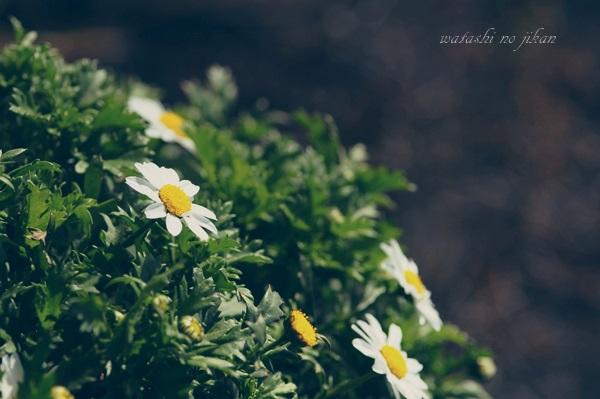 flower190325.jpg