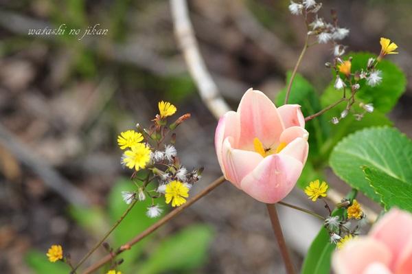 flower190329-1.jpg