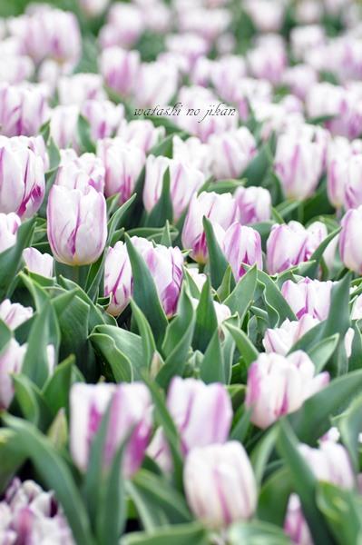 flower190404.jpg