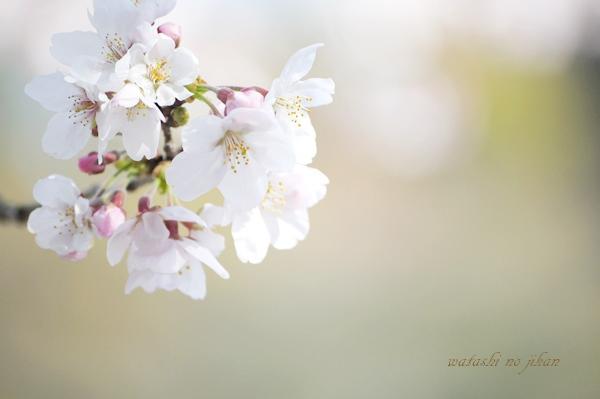 flower190406.jpg
