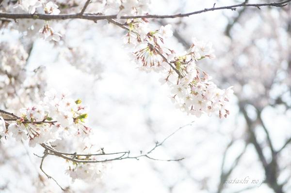 flower190407.jpg