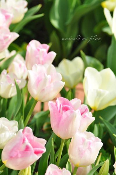 flower190410.jpg