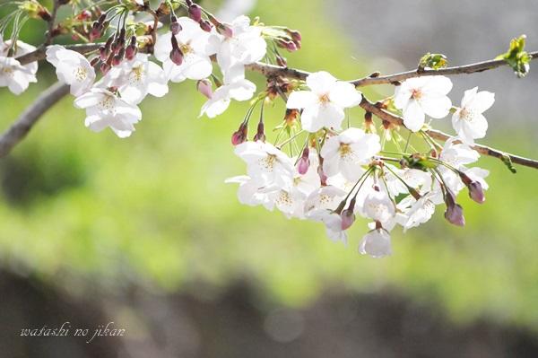 flower190411.jpg