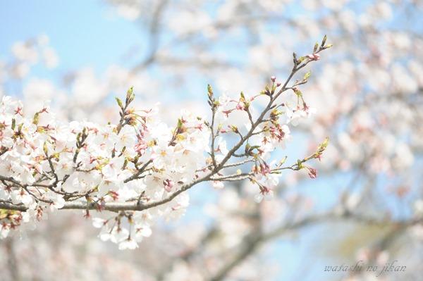 flower190414.jpg
