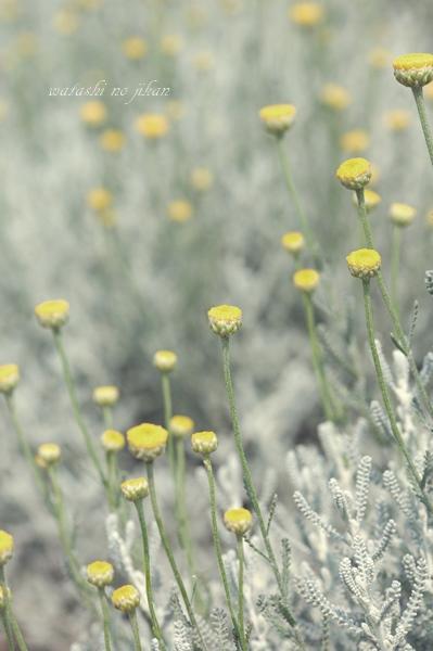 flower190415.jpg