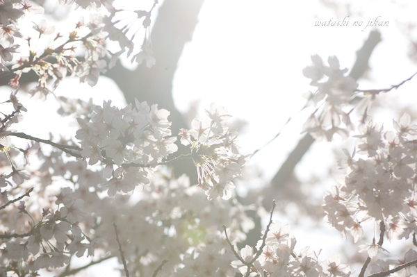 flower190416.jpg