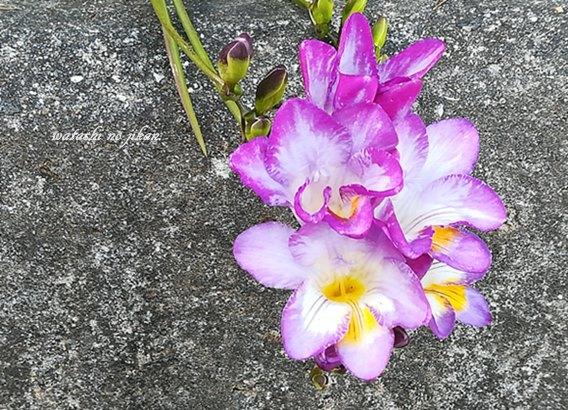 flower190417-2.jpg