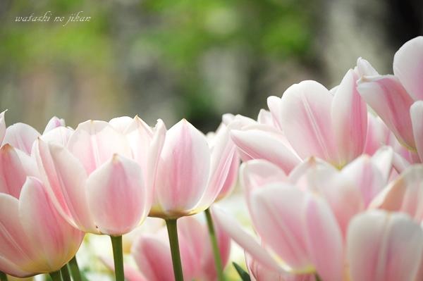 flower190419.jpg