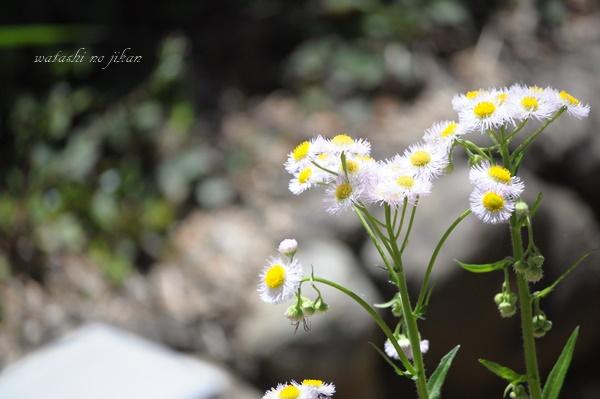 flower190420.jpg